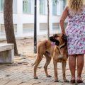 Los perros, aliados terapéuticos de las víctimas de violencia machista